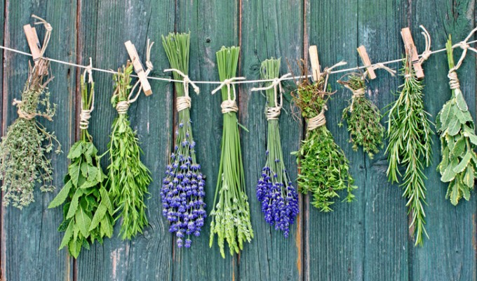 8 Best Healing Herbs you should have in your kitchen