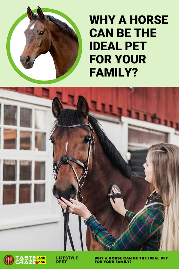 Why a Horse can be the Ideal Pet for Your Family. #Horse #IdealPet #PetforFamily #PetForYou #Owningahorse #horsestyle #horseaddict #horselifestyle #horsefacts #horsefactsinteresting #horseriding #beautifulhorse #horsepolo #beautifulhorse #horselove
