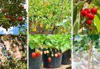 20 Easiest Fruits to Grow - Beginner Friendly Ideas